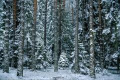 zimowe_podlasie_las2_waskiel
