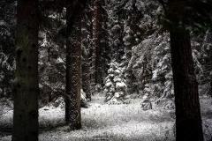 zimowe_podlasie_las3_waskiel