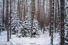 zimowe_podlasie_las_waskiel