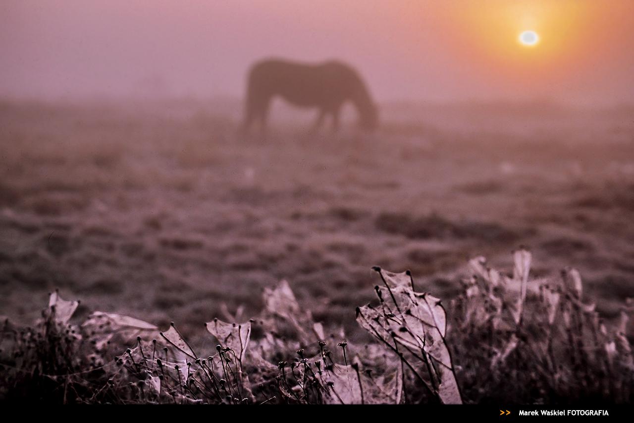 O pożytkach z mgły