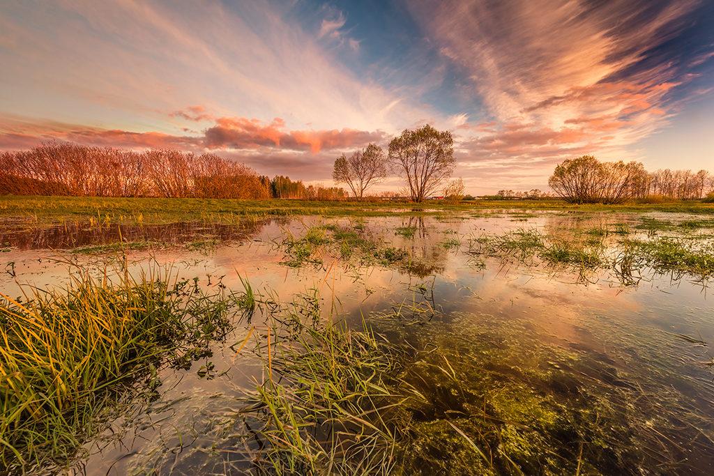 Blog o fotografii Marek Waśkiel w złotej godzinie nad Biebrzą