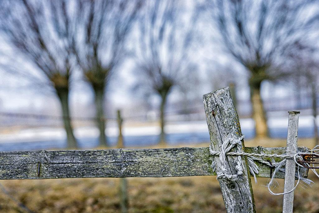 jak fotografować krajobrazy Marek Waśkiel Płot i wierzby w Dolinie Narwi