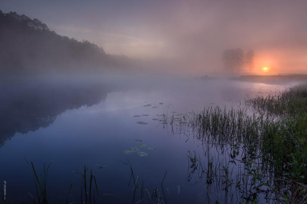 Nad starorzeczami Bugu. fot. Marek Waśkiel