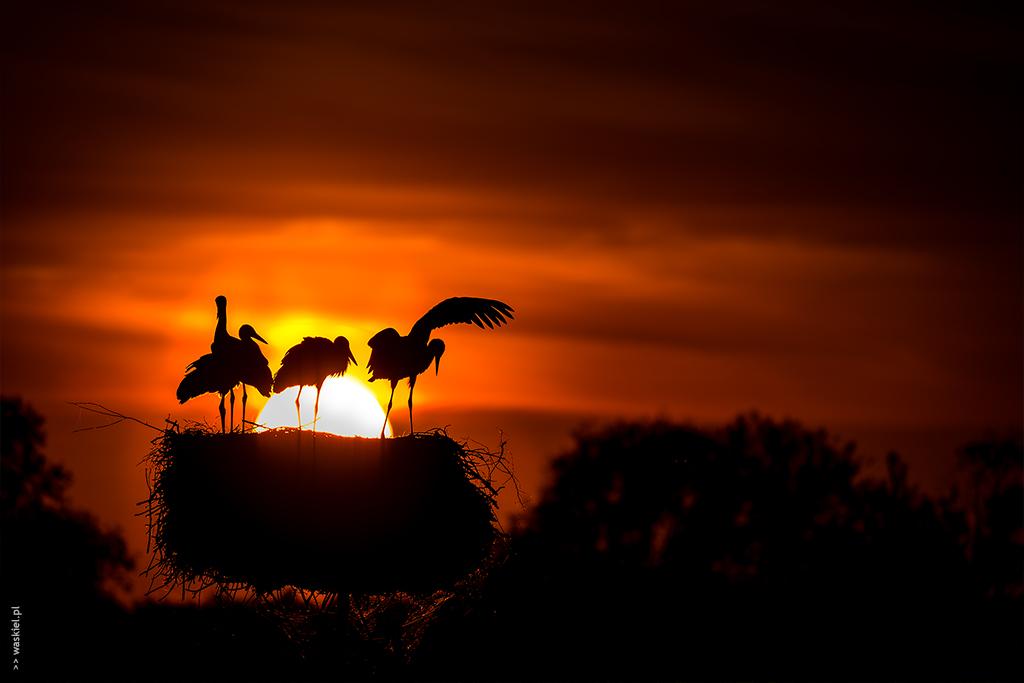 Obraz przedstawiający kreatywne wykorzystanie oświetlenia do stworzenia ciekawych zdjęć.