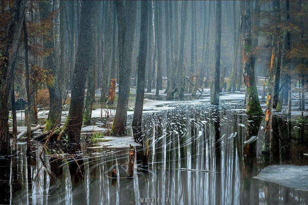 jak fotografować las - potrzebujemy mrocznego dnia.