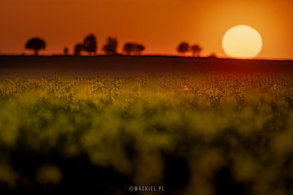 kompozycja w fotografii kolor blog Marek Waskiel