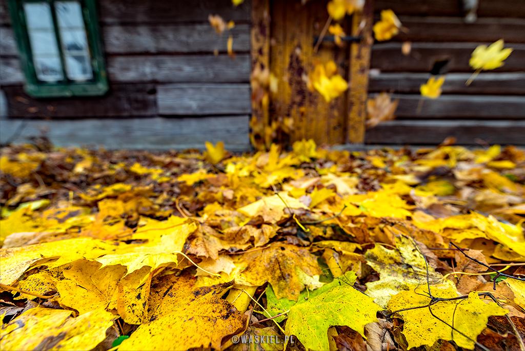 Fotodziennik 29 października: Klęcząc przed starą chatą