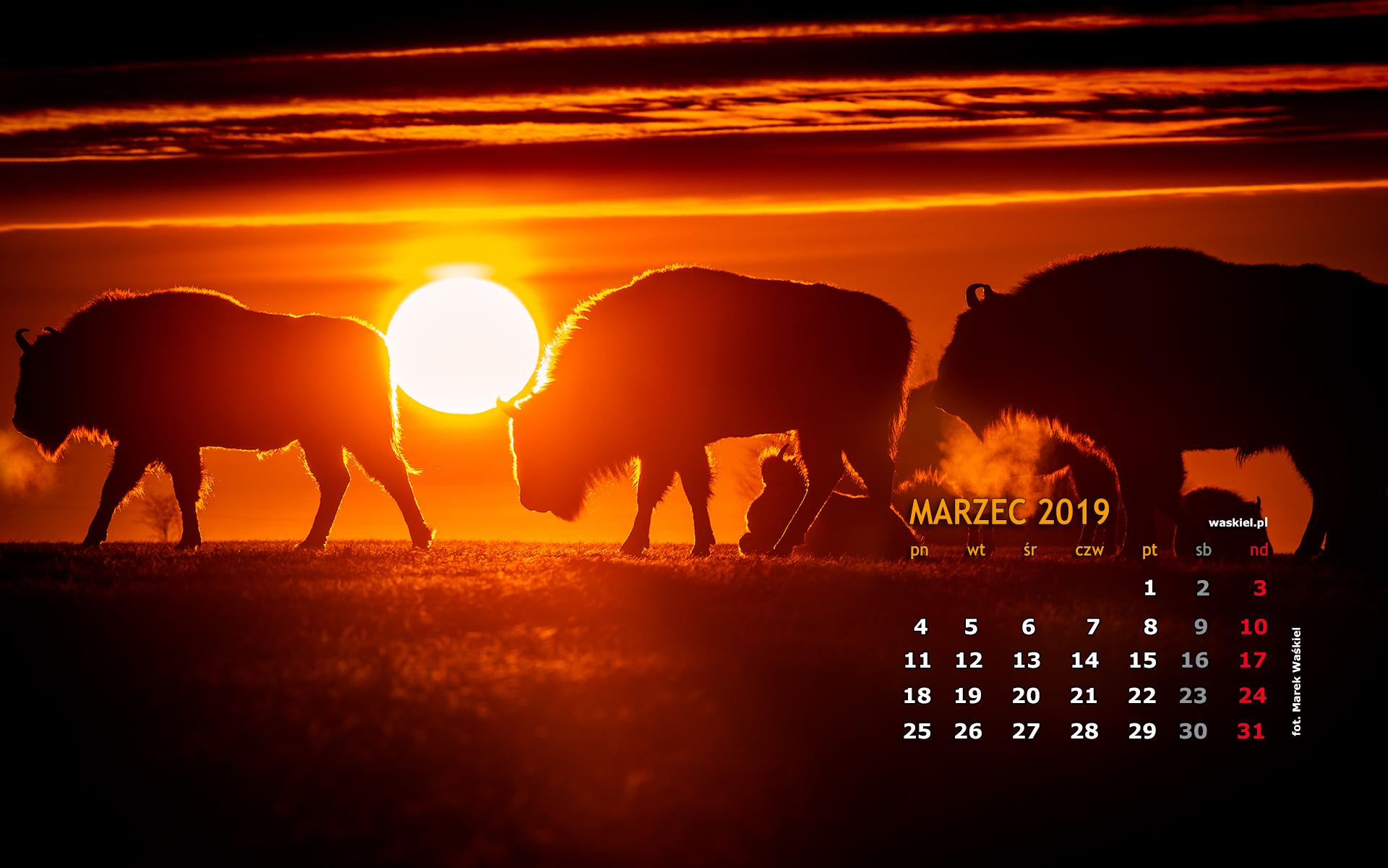 Tapeta Na Pulpit Marzec 2019 Kurs Fotografii Warszawa Marek