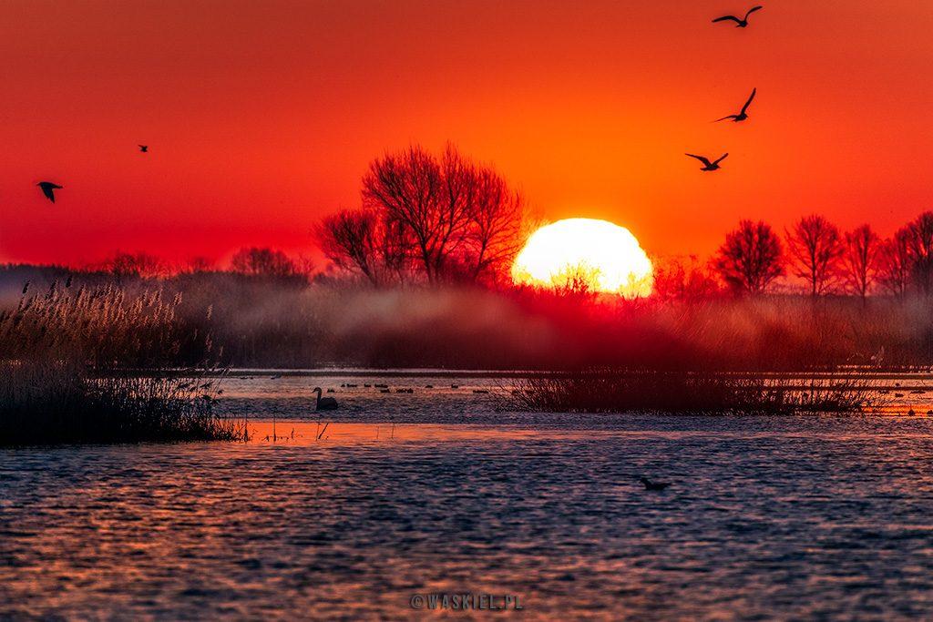 Wschód słońca nad Narwią. fot. Marek Waśkiel