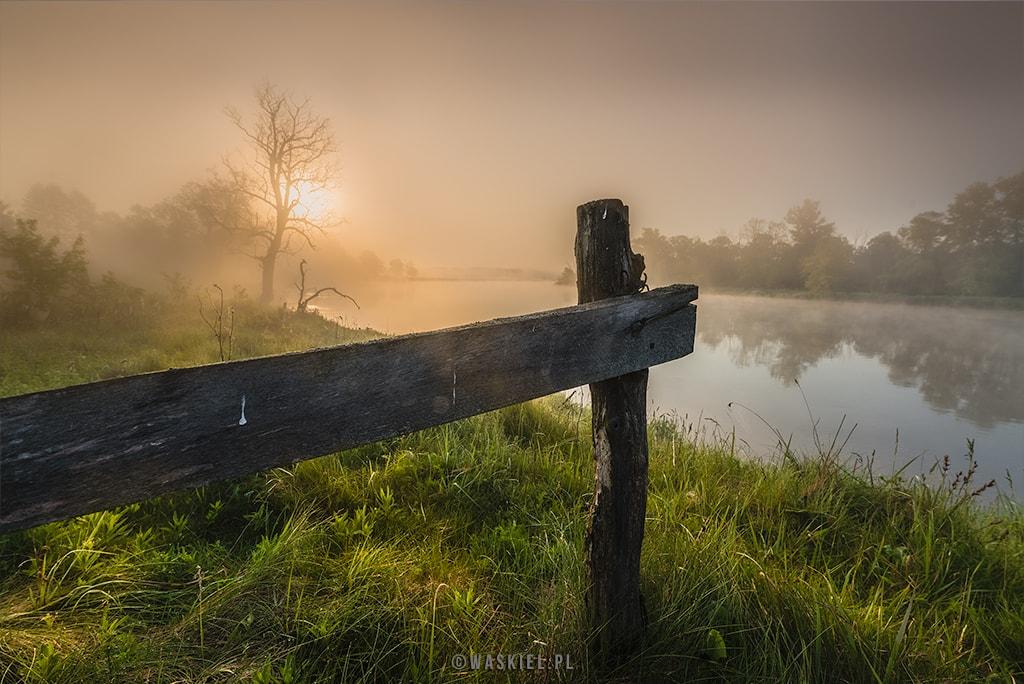 Obraz ilustrujący, jakie zdjęcia można wykonywać dobrym aparatem fotograficznym.