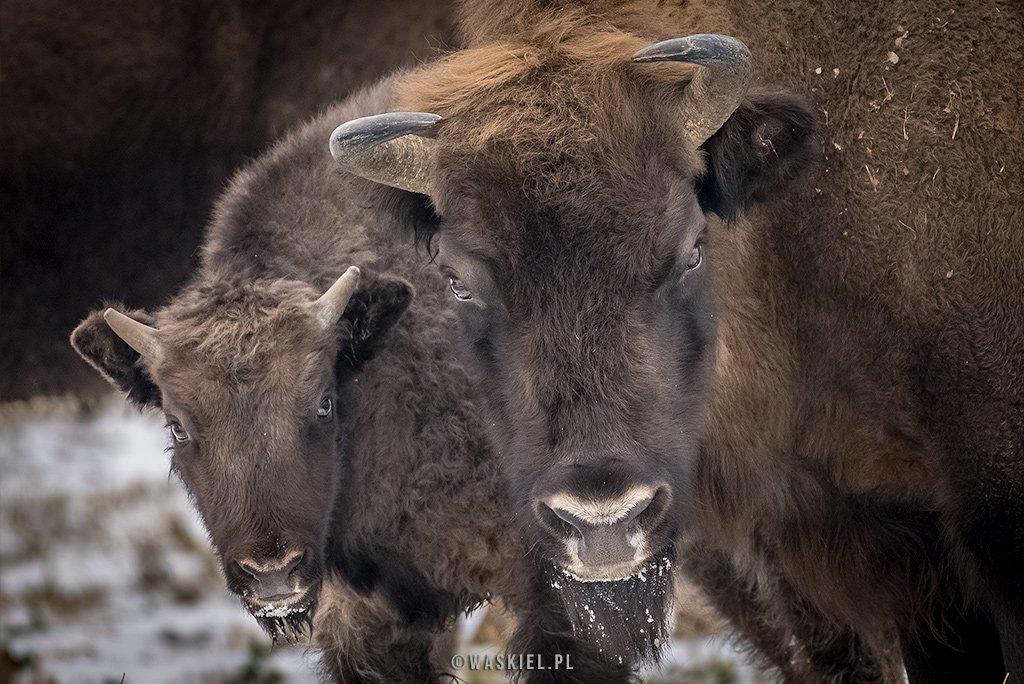 Zdjęcie prezentujące, jaki aparat wybrać do fotografowania przyrody.