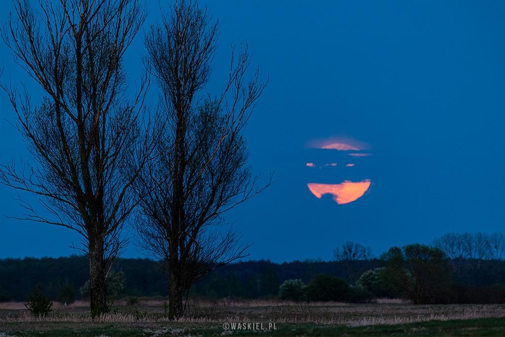 Fotografia przedstawiająca pełnię księżyca oraz kwiaty.