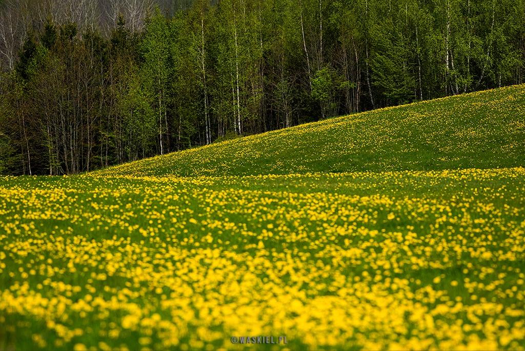 Fotografia przedstawiająca kolory wiosny na Podlasiu.
