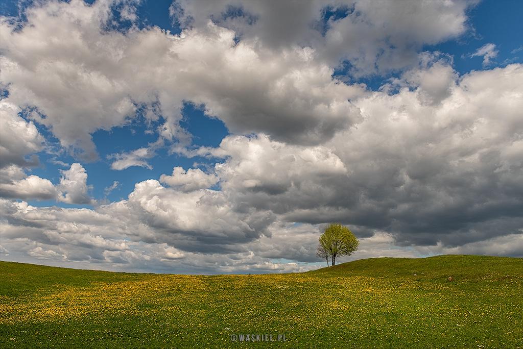 Obraz przedstawiający minimalistyczną kompozycję wiosennej fotografii.