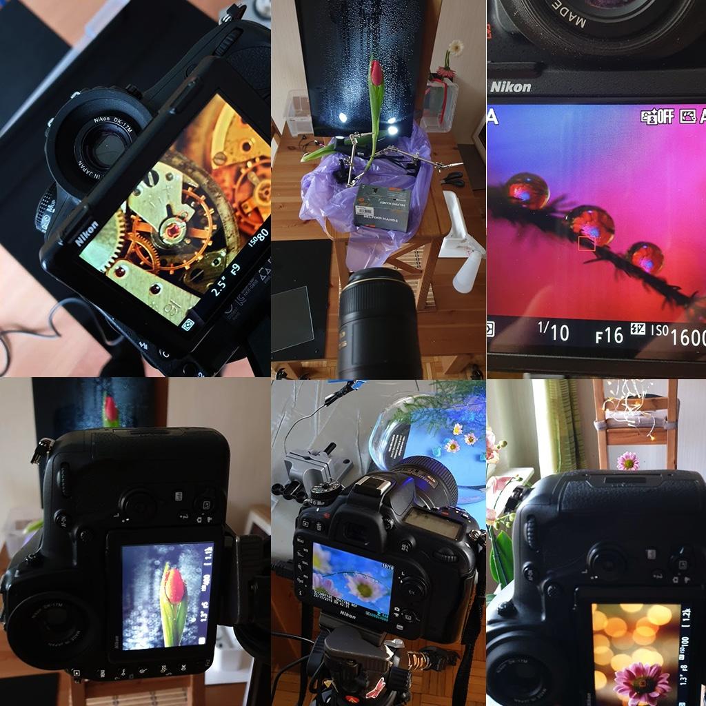 Obraz przedstawiający, jak wygląda kurs robienia zdjęć makro.