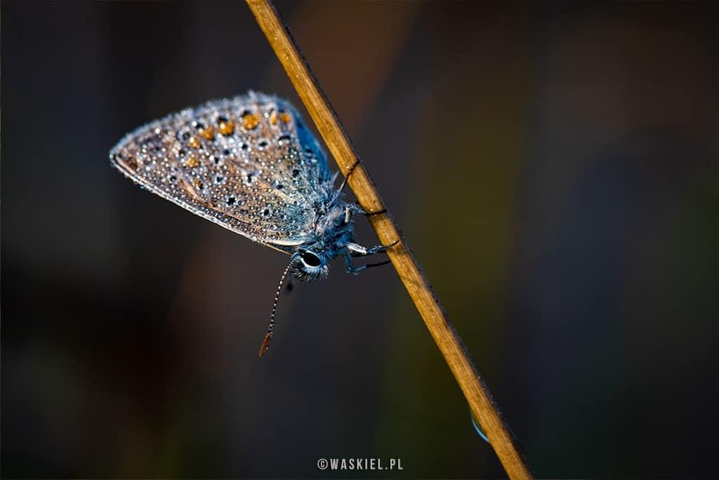 Obraz przedstawiający jak wygląda fotografowanie makro w przypadku tematów przyrodniczych w plenerze.