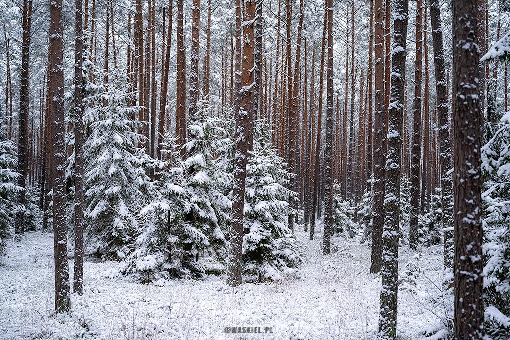 Obraz przedstawiający, jak wygląda zimowe fotografowanie.