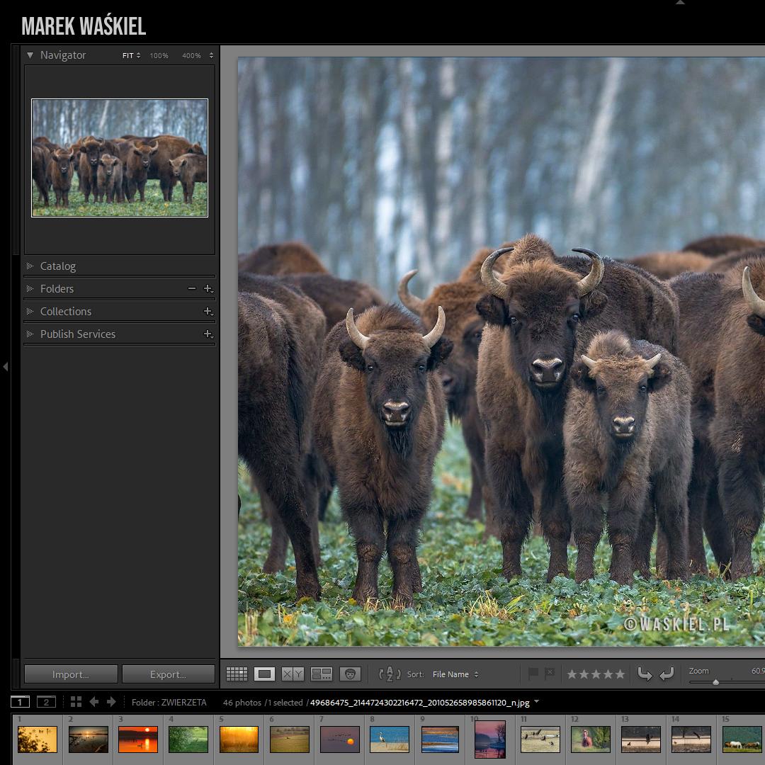 Kadr przedstawiający, jak wygląda kurs fotografii w podróży.